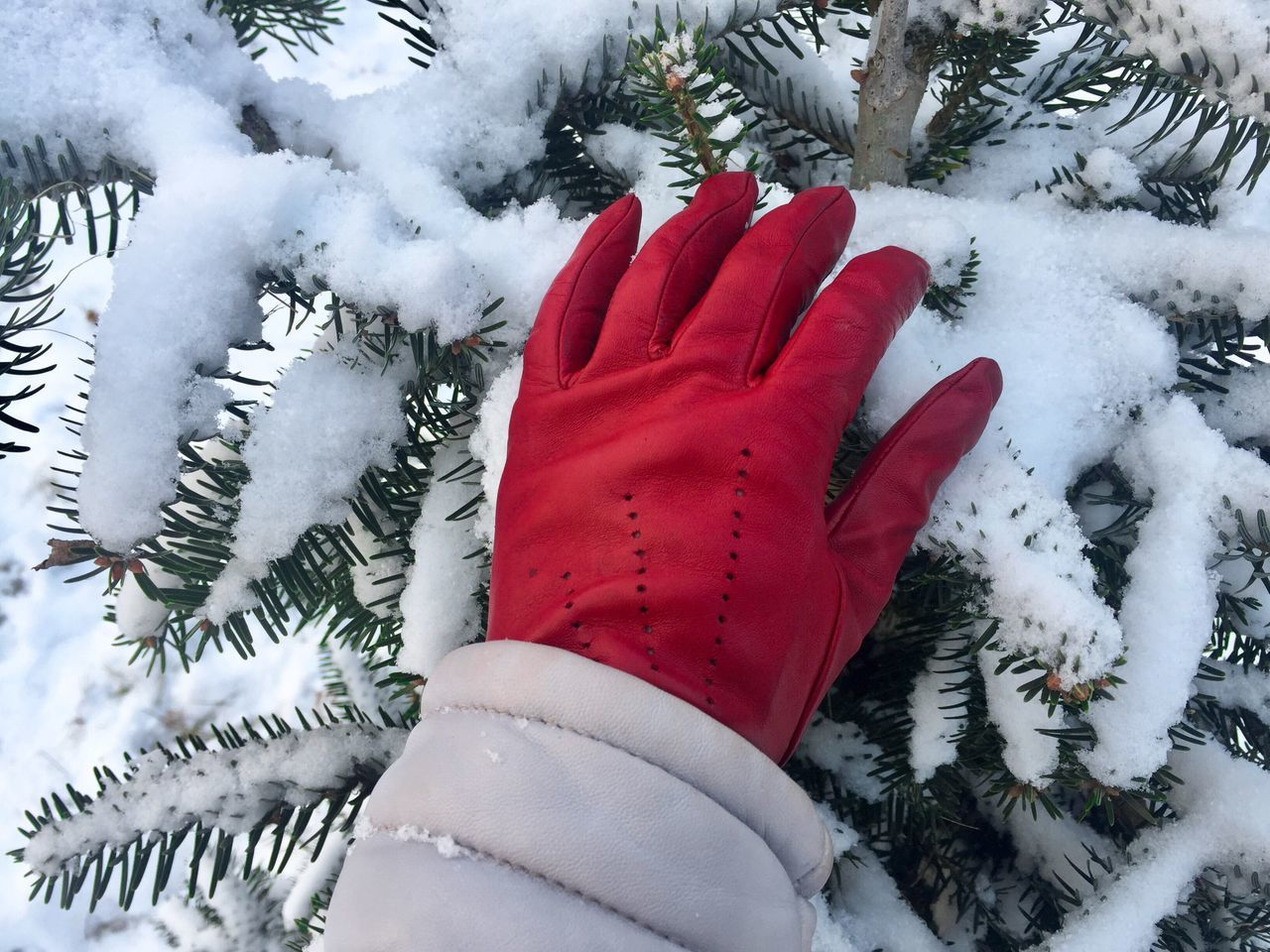 Woman hand wearing red glove touching pine cone tree covered in snow Winter Snow Cold Temperature Red Celebration One Person Close-up Tree Day Outdoors Women Nature Human Body Part Warm Clothing Christmas Decoration Human Hand Touch Glove Cold Snow Winter Needles Evergreen Tree