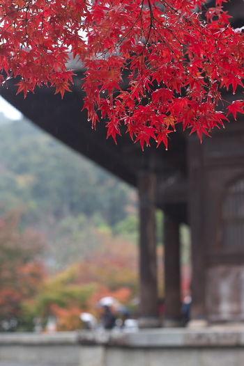 そうだ京都、行こう。 南禅寺 紅葉 紅葉🍁 Nanzenji Temple Autumn Leaves Autumn🍁🍁🍁 Nature Nature Photography Nature Collection Outdoors Beauty In Nature Red