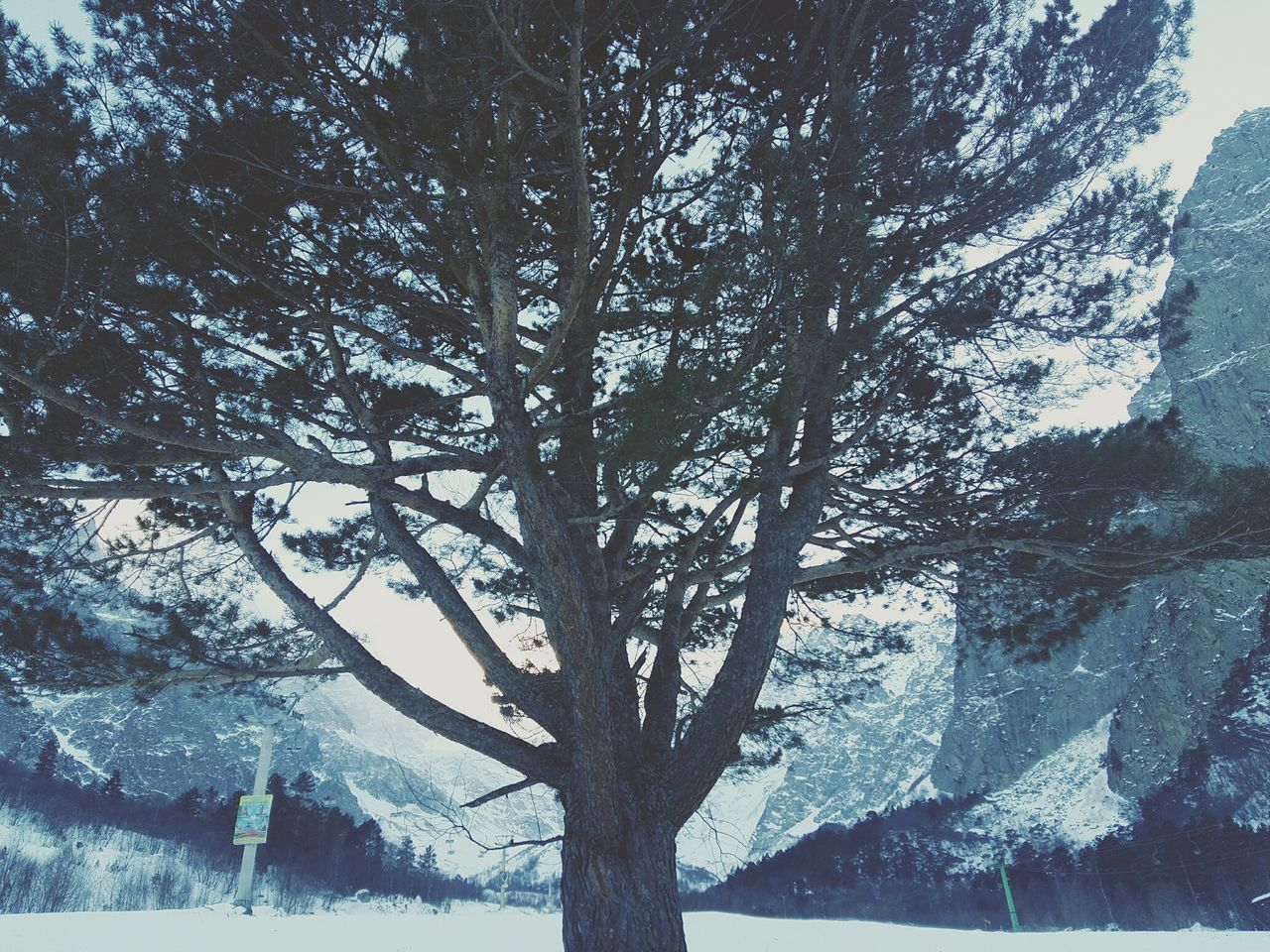 tree, nature, snow, beauty in nature, tranquility, winter, scenics, tree trunk, branch, outdoors, tranquil scene, day, cold temperature, mountain, landscape, sky, growth, no people