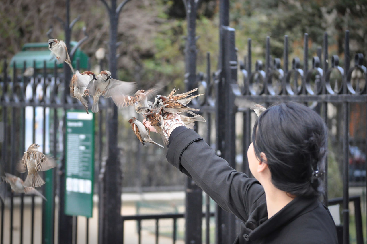 freedom or food ? Animal Animaux Bird Bird Photography Birds Birds Of EyeEm  Birds_collection Oiseau En Vol Oiseaux Urbains Paris