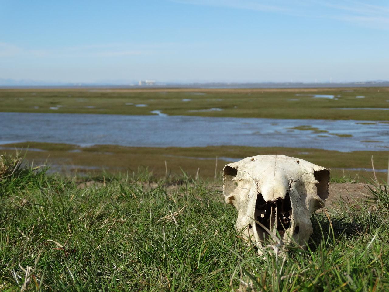 Beautiful stock photos of totenkopf, Animal Skull, Beach, Beauty In Nature, Bone