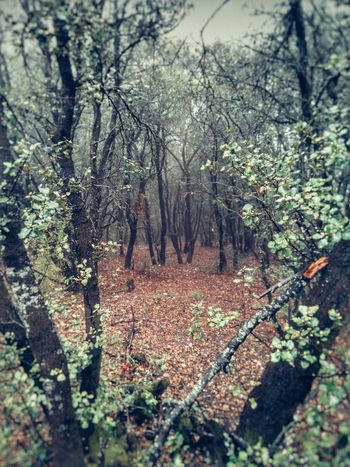Ruta Montain  Catalonia Tree Montana Forest Forest Photography Rural Arboles Mura Niebla The Great Outdoors - 2016 EyeEm Awards