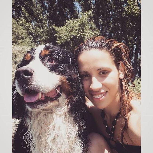 Bernesemountaindog Bernesedaily Bernesedog Petstagram petsofinstagram instadog instagram dogsofinstagram dogstagram photooftheday