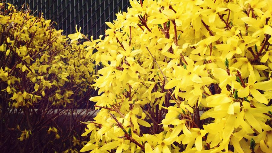 Spring First Colors