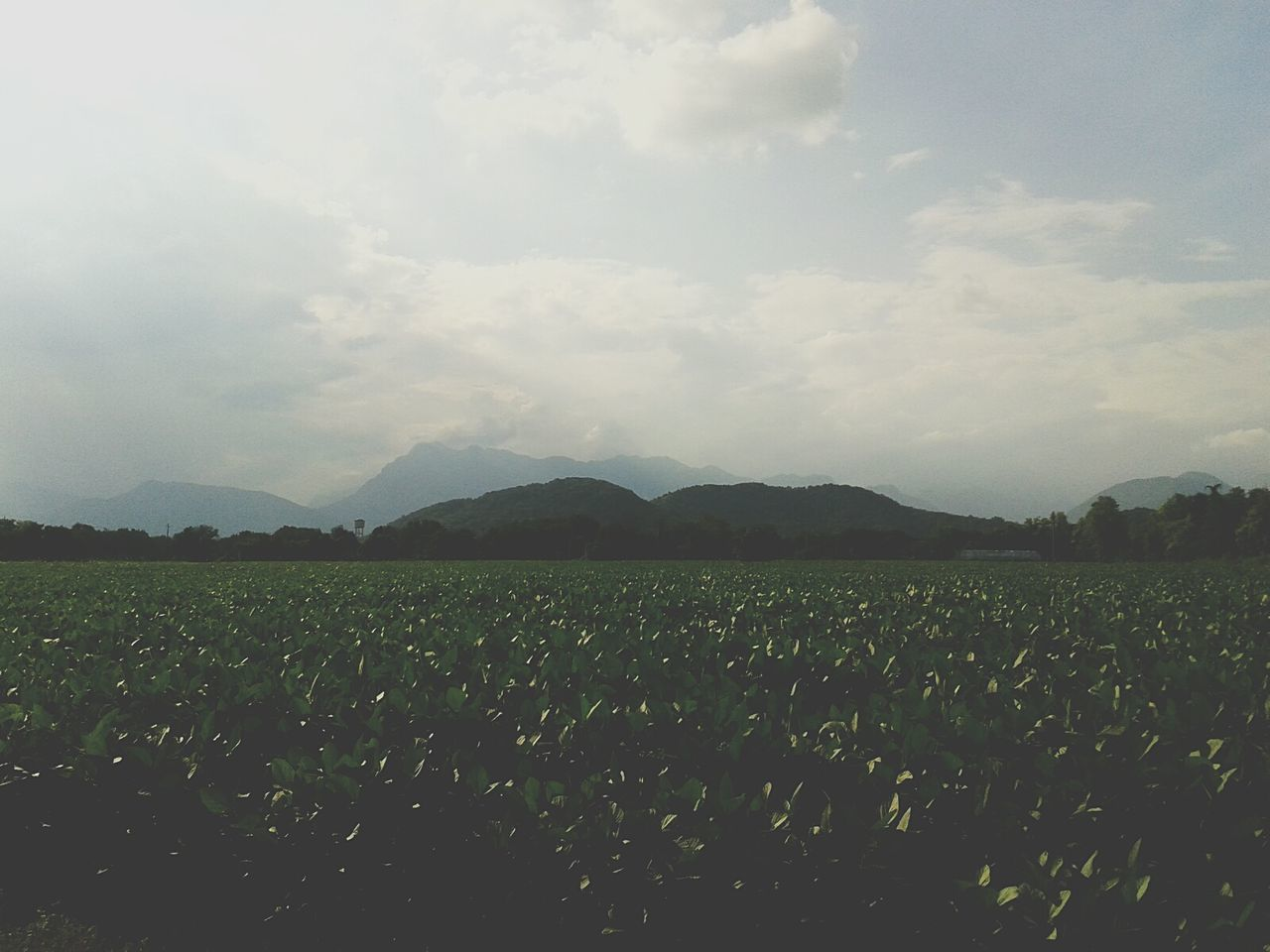 Fields With Foggy Mountains