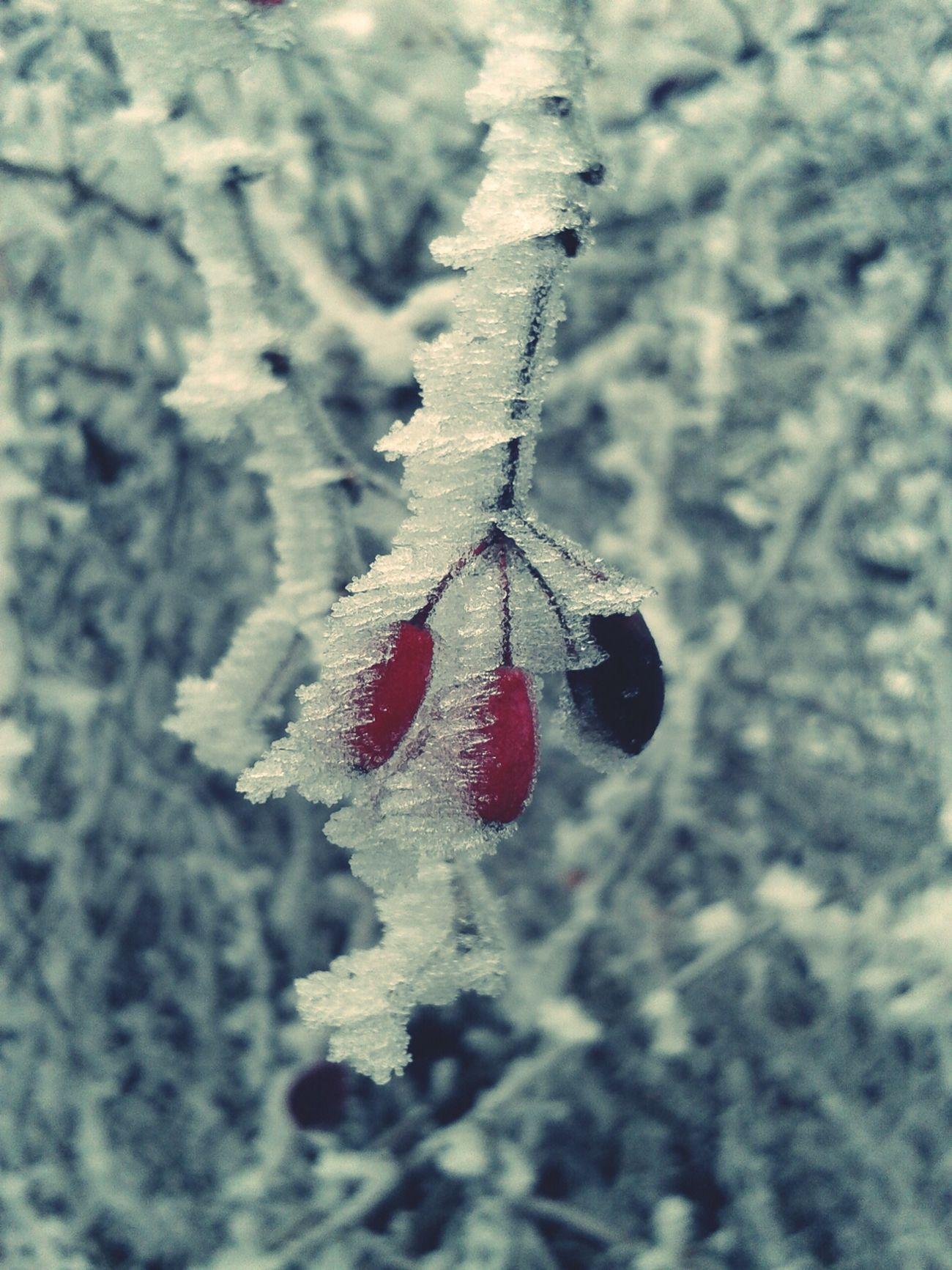 Winterwhitewithcanvaspop White Snow