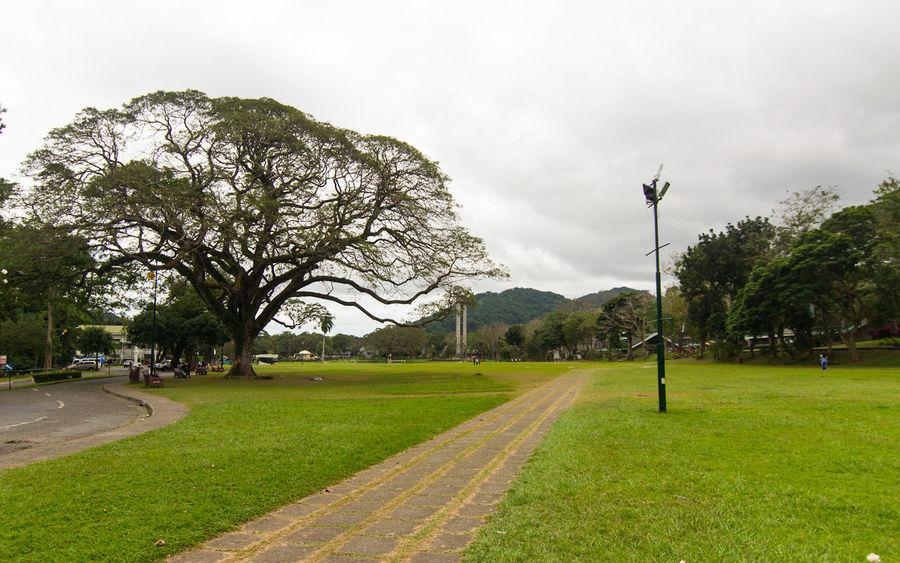 Overcast skies. Tree No People Nature Cloud - Sky Outdoors Landscape Sky Grass Day Lush - Description Park Freedom Park UP Los Baños Laguna Philippines Eyeem Philippines Nikon D3100 Tokina 11-16 F/2.8