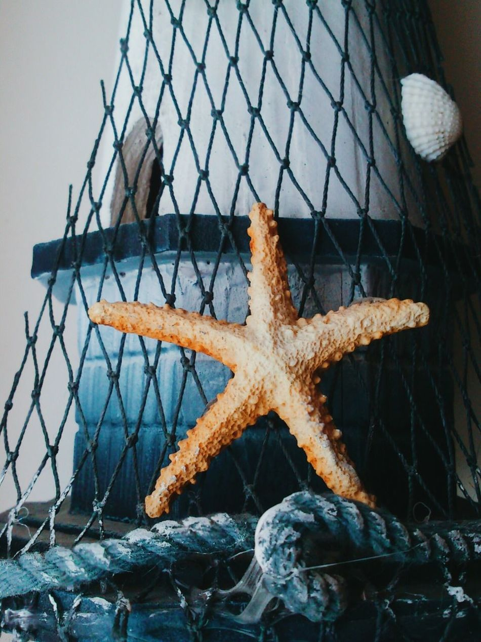 Beautiful stock photos of starfish, Animal Shell, Animal Themes, Animals In The Wild, Architecture