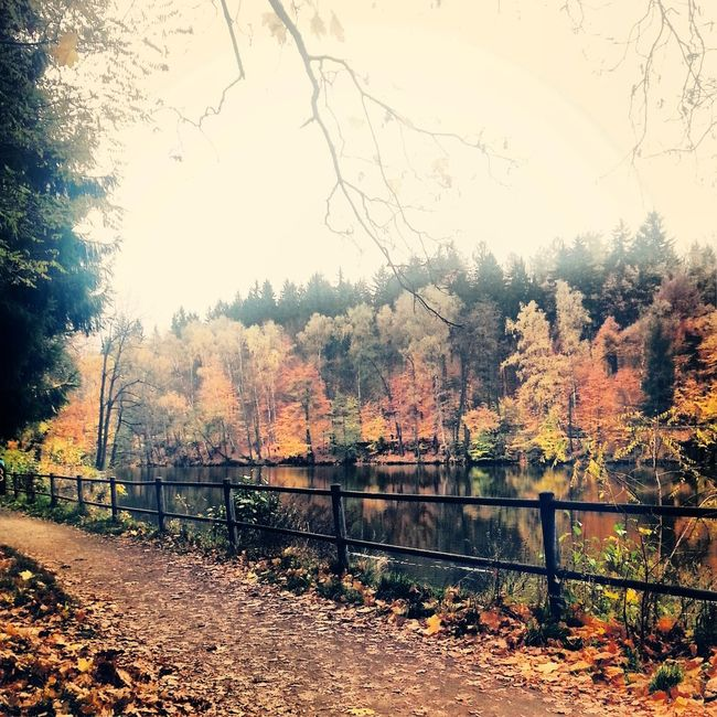Fence Tree Tranquil Scene Scenics Season  Railing Tranquility Safety Autumn Protection Water Change Non-urban Scene Branch Beauty In Nature Nature Day Solitude Remote Outdoors Czech Republic Liberec