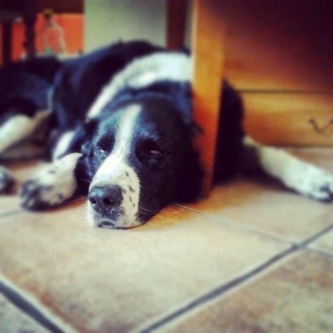 Divertito Eddie Dog Animal pet