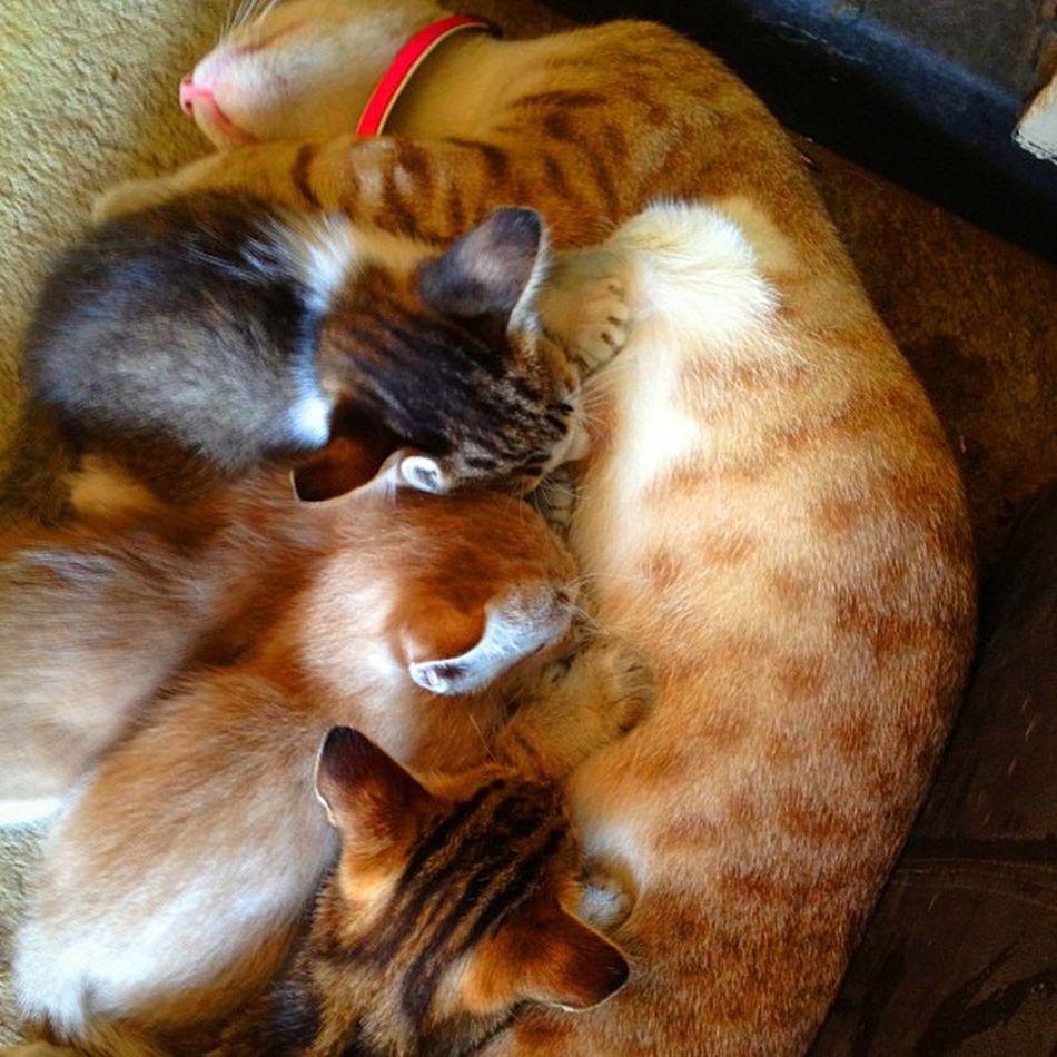เคลิ้ม!😻😋Cat Littlecat  Meaw Cute Animal Milk Bangkok Thailand Picofday Instargram Instarpic