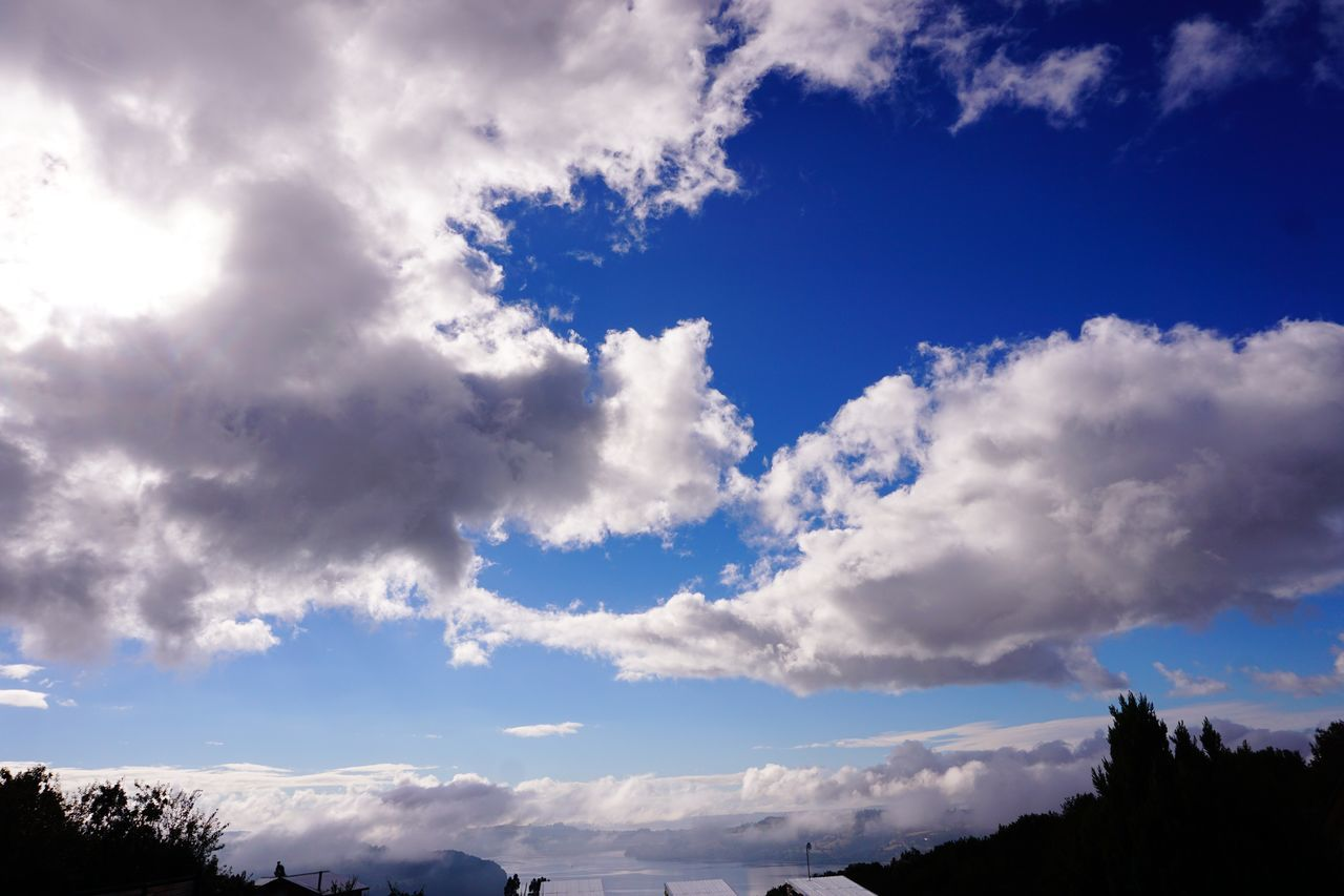 Dreamin about... Cloud - Sky Sky Clouds And Sky Cloudporn Cloudscape Low Angle View Tree Outdoors Beauty In Nature Nature No People Scenics Tranquility Dreaming EyeEm Nature Lover Dream Tranquility Blue White Sony A6000 The Purist (no Edit, No Filter)