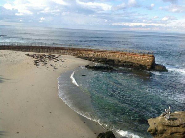 La Jolla California Sea Lions Beach Resting Blue Sky White Clouds Ocean Pacific Ocean Beautiful Seagulls Large Boulder