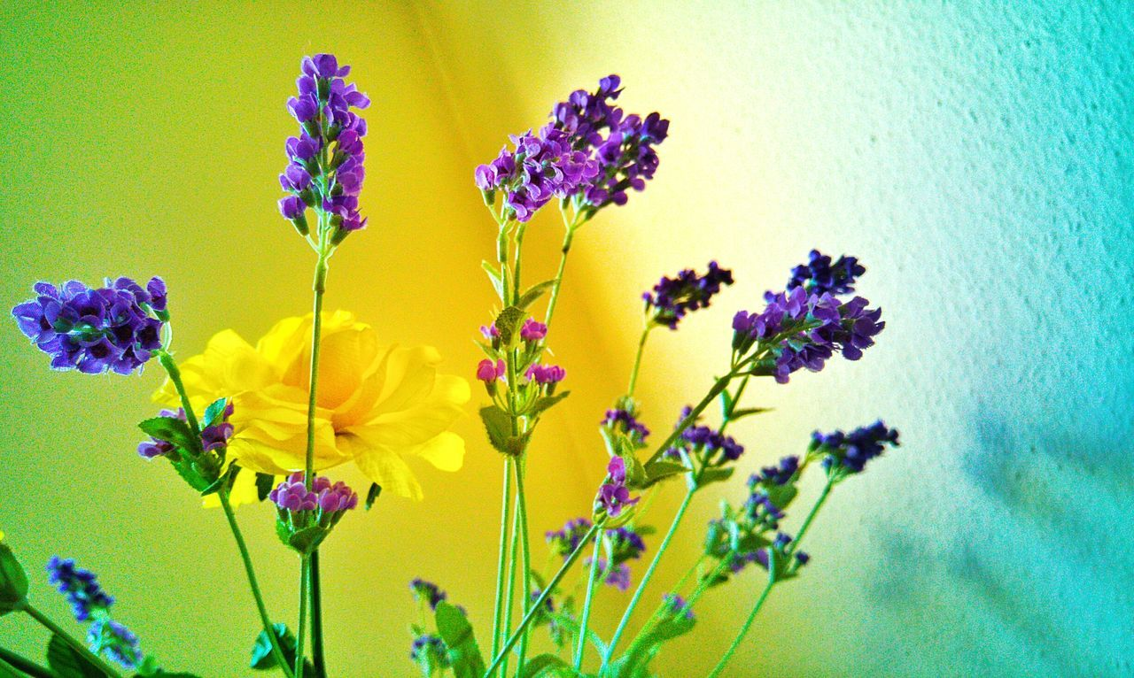 Flowers Plants Beautiful Yellow Violet Flowers Small Mother EyeEm Gallery Colorful At Mymothershome Light