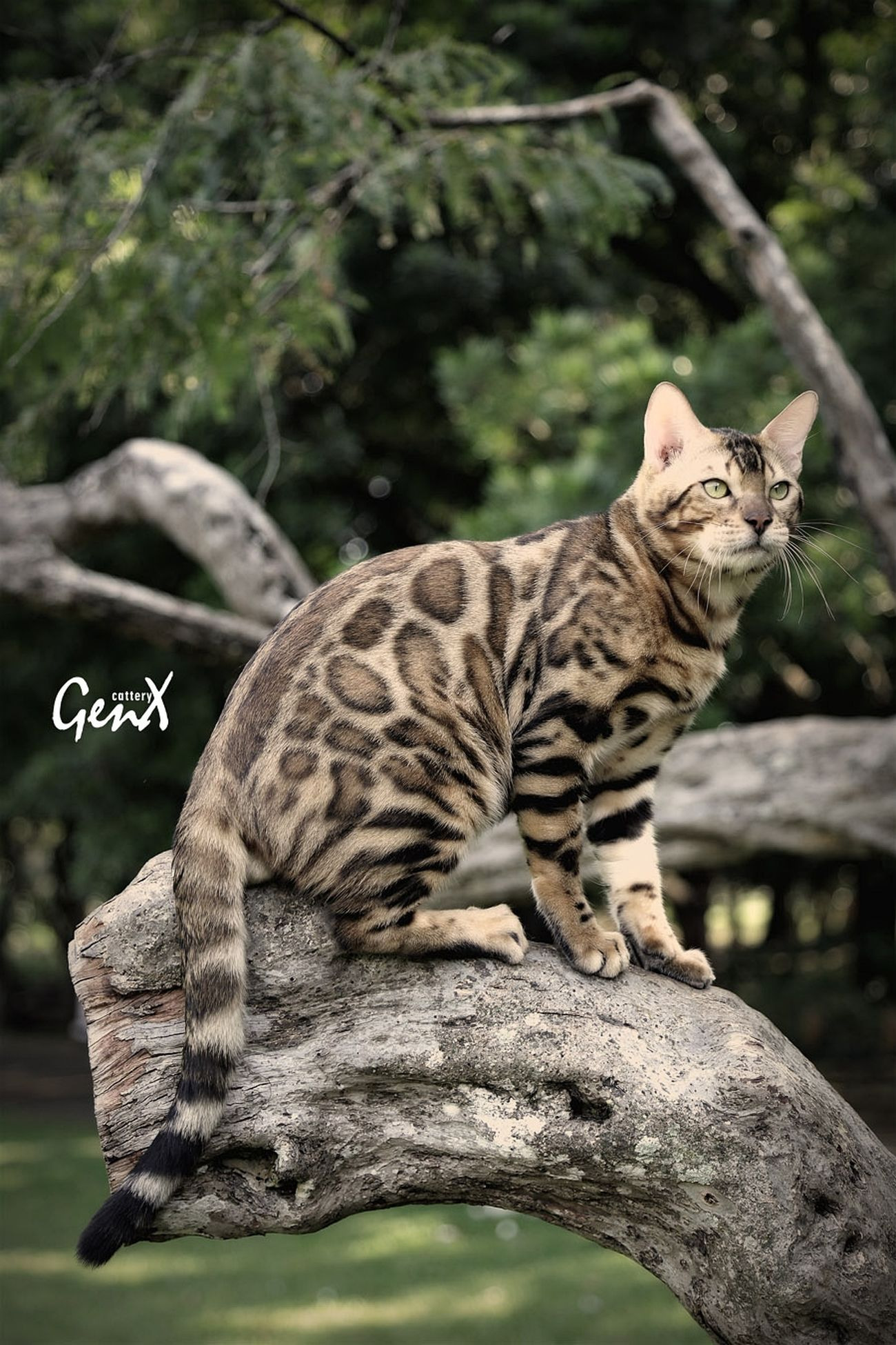 Animals Cats Pets Animal Meow Bengal Cat Cute Pets EyeEm Indonesia EyeEm Animal Lover Petstagram Pet Photography  Hello World Aerial Shot My Cats Taking Photos