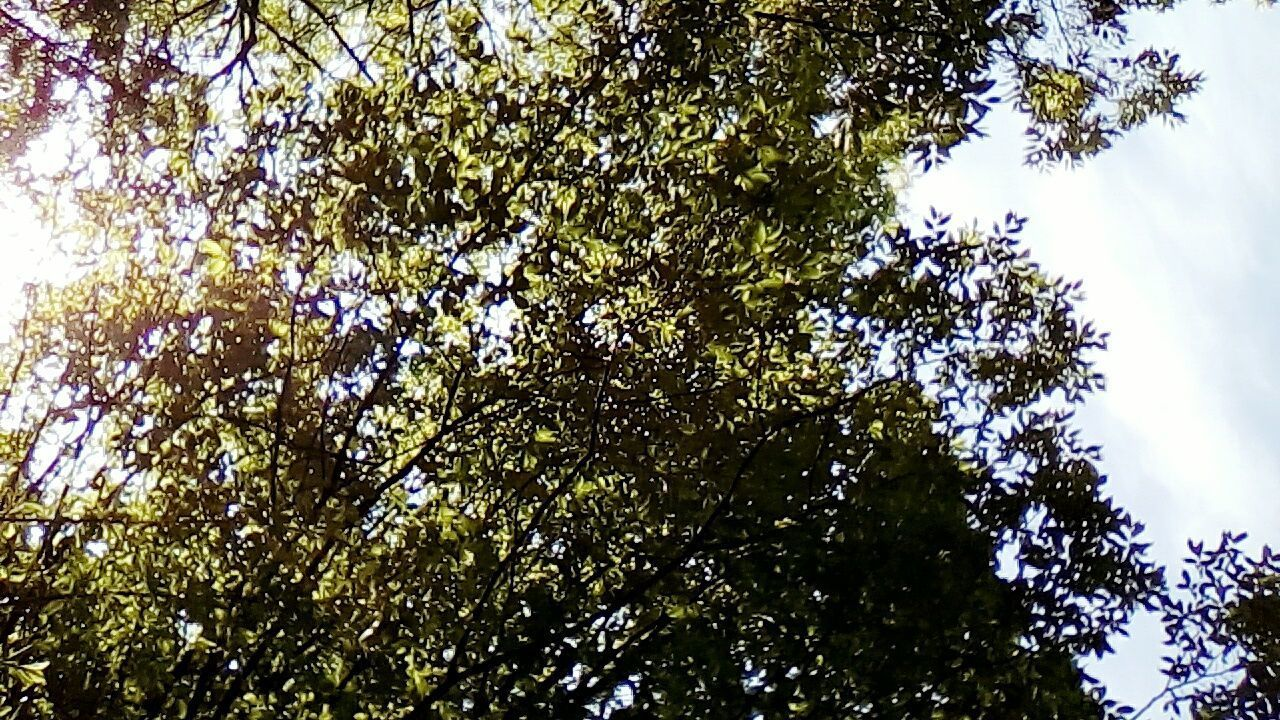 tree, low angle view, nature, growth, branch, environment, beauty in nature, forest, no people, sky, outdoors, day