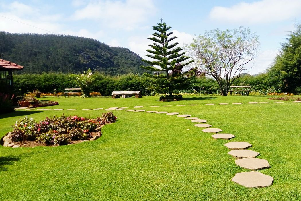 Pathway Footpath Formal Garden Garden Path Lawn Tree Park - Man Made Space Day Naturebackground Clear Sky Brightmorning Beautiful Nature
