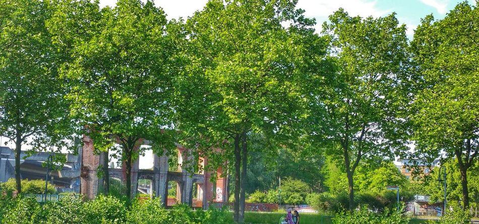 Tree Outdoor Nature Architecture Bogen Aquädukt Nature Photography Natur