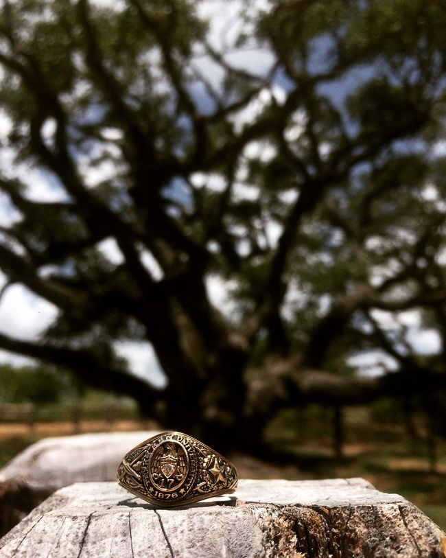 Aggie ring at The Big Tree in Rockport, Texas. Aggie Ring Aggies Big Tree Rings Rockport Texas Texas Travel First Eyeem Photo