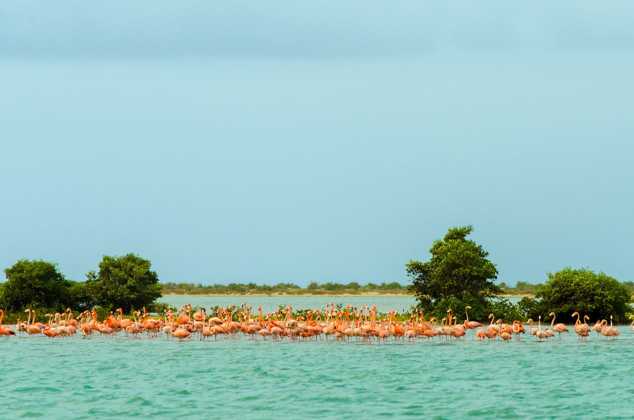 Large flock of flamingos in the Caribbean Sea in La Guajira, Colombia Beauty In Nature Bird Coast Colombia Color Exotic Fauna Flamingos Flying Idyllic La Guajira La Guajira Colombia Landscape Nature Outdoor Pink Punta Gallinas Scenics Sea Travel Tree Vacation Water Wild Wildlife