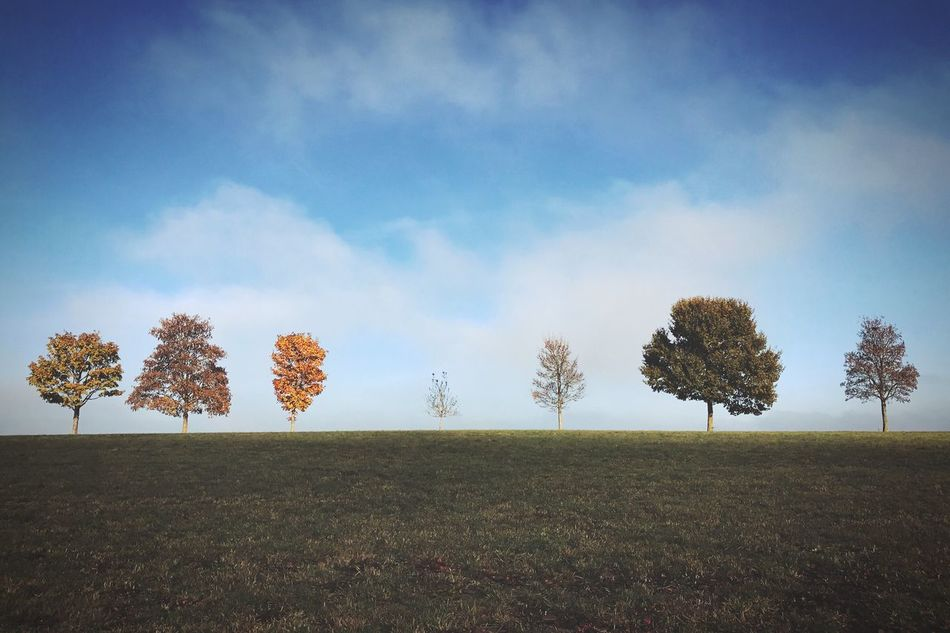 Tree Nature Sky Field Landscape Growth Rural Scene Tranquil Scene Tranquility Agriculture Beauty In Nature No People Scenics Outdoors Grass Day Cloud - Sky Autumn