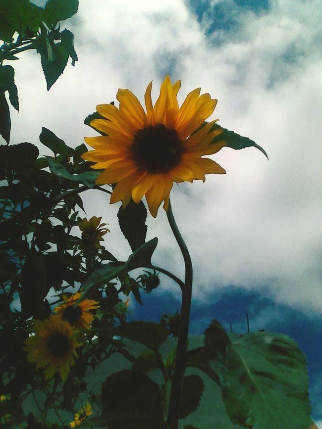 Picoftheday Photography Byme 😆 Cool Like Hello ❤ Imnewtothis Hola :) Hola Flor Girasol