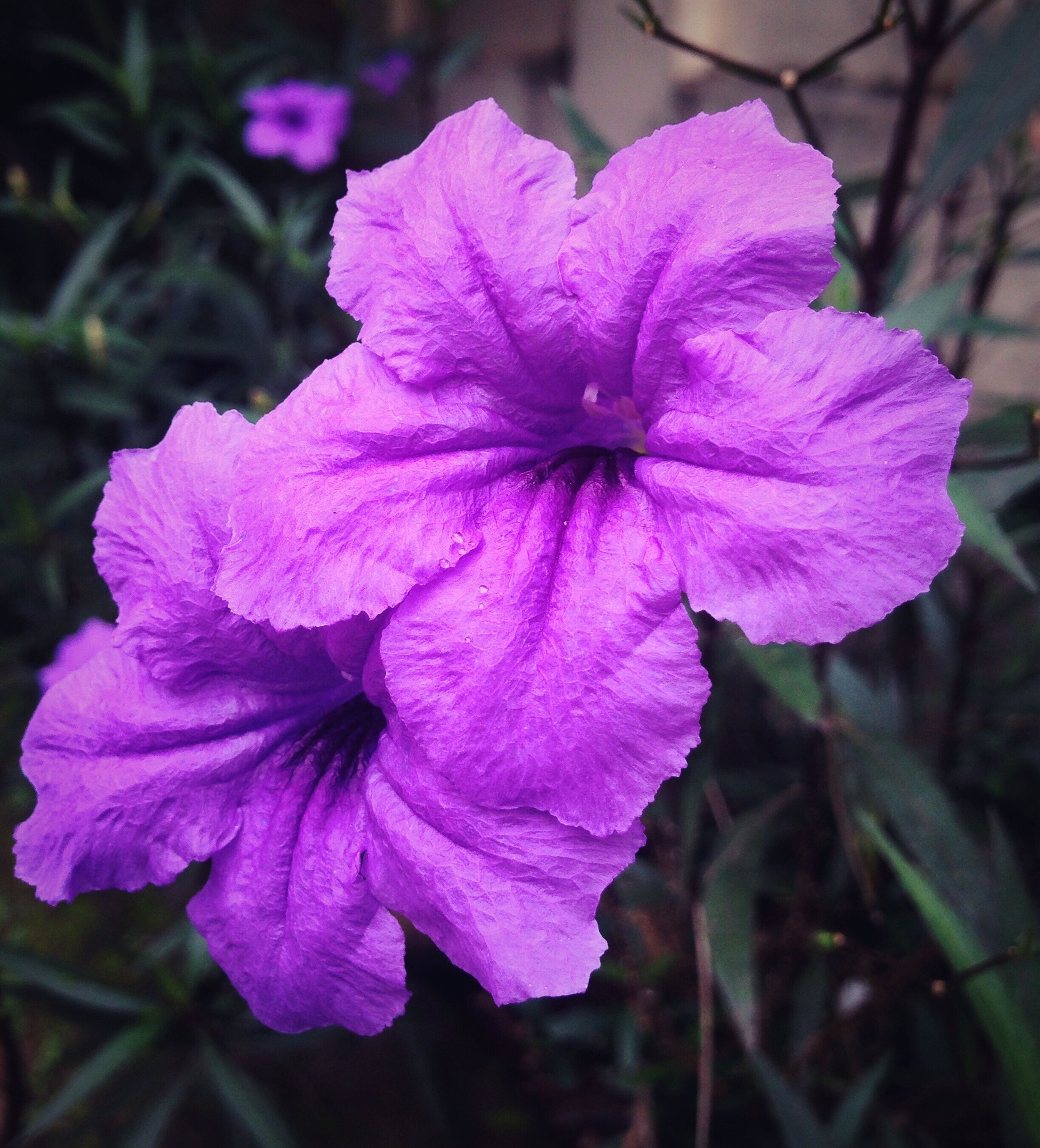 flower, petal, freshness, flower head, fragility, growth, close-up, beauty in nature, focus on foreground, blooming, nature, purple, plant, in bloom, pink color, day, outdoors, park - man made space, single flower, no people