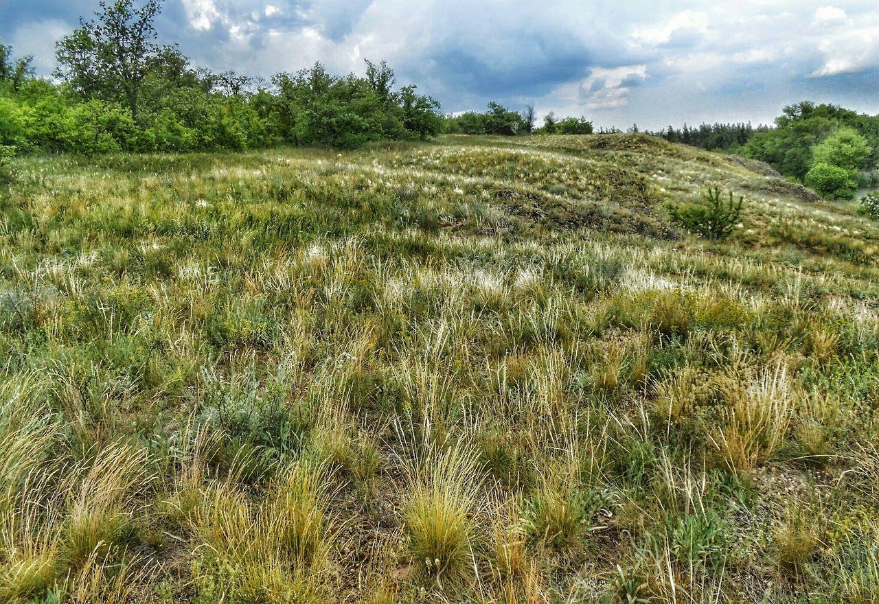 Grassland Against Cloudy Sky