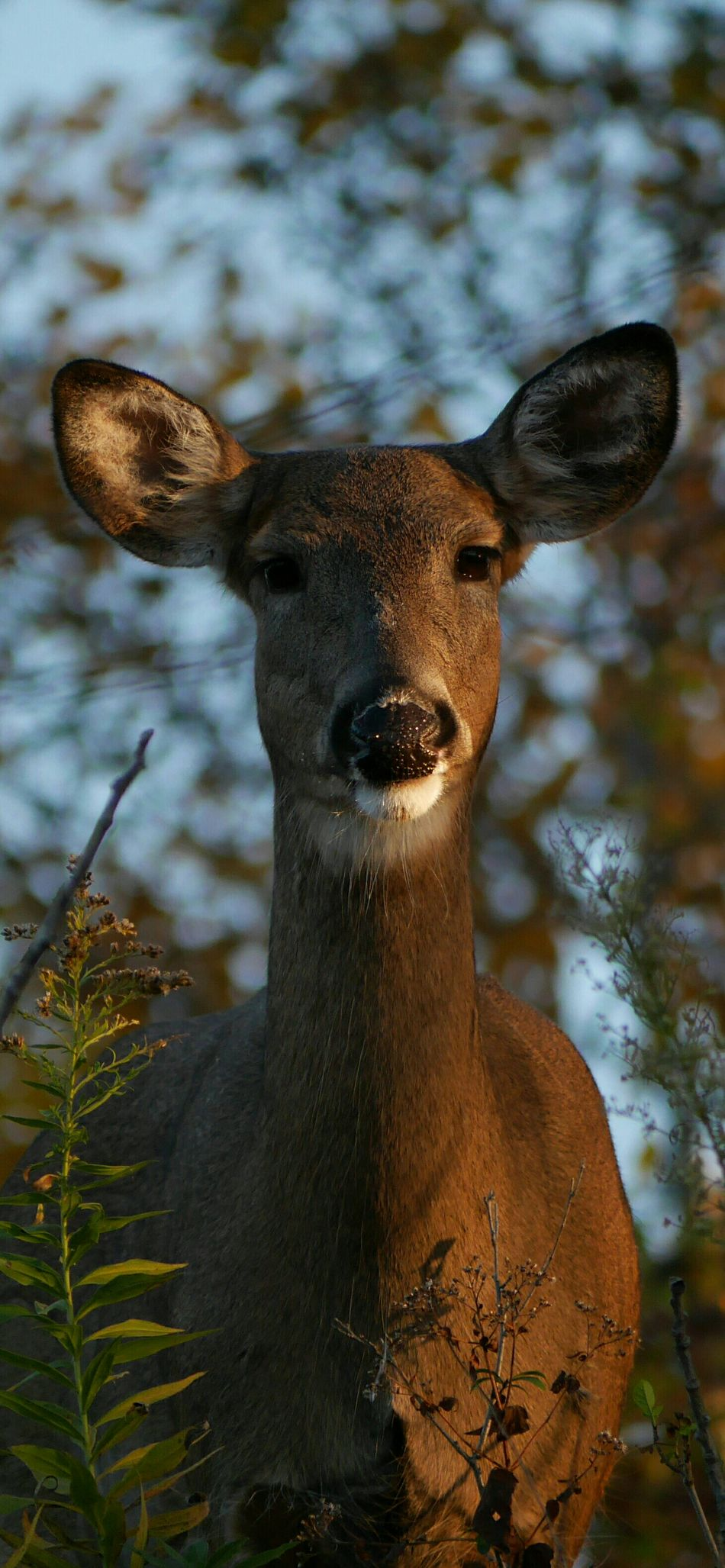Beautiful stock photos of deer, Animal Themes, Animals In The Wild, Beauty In Nature, Day
