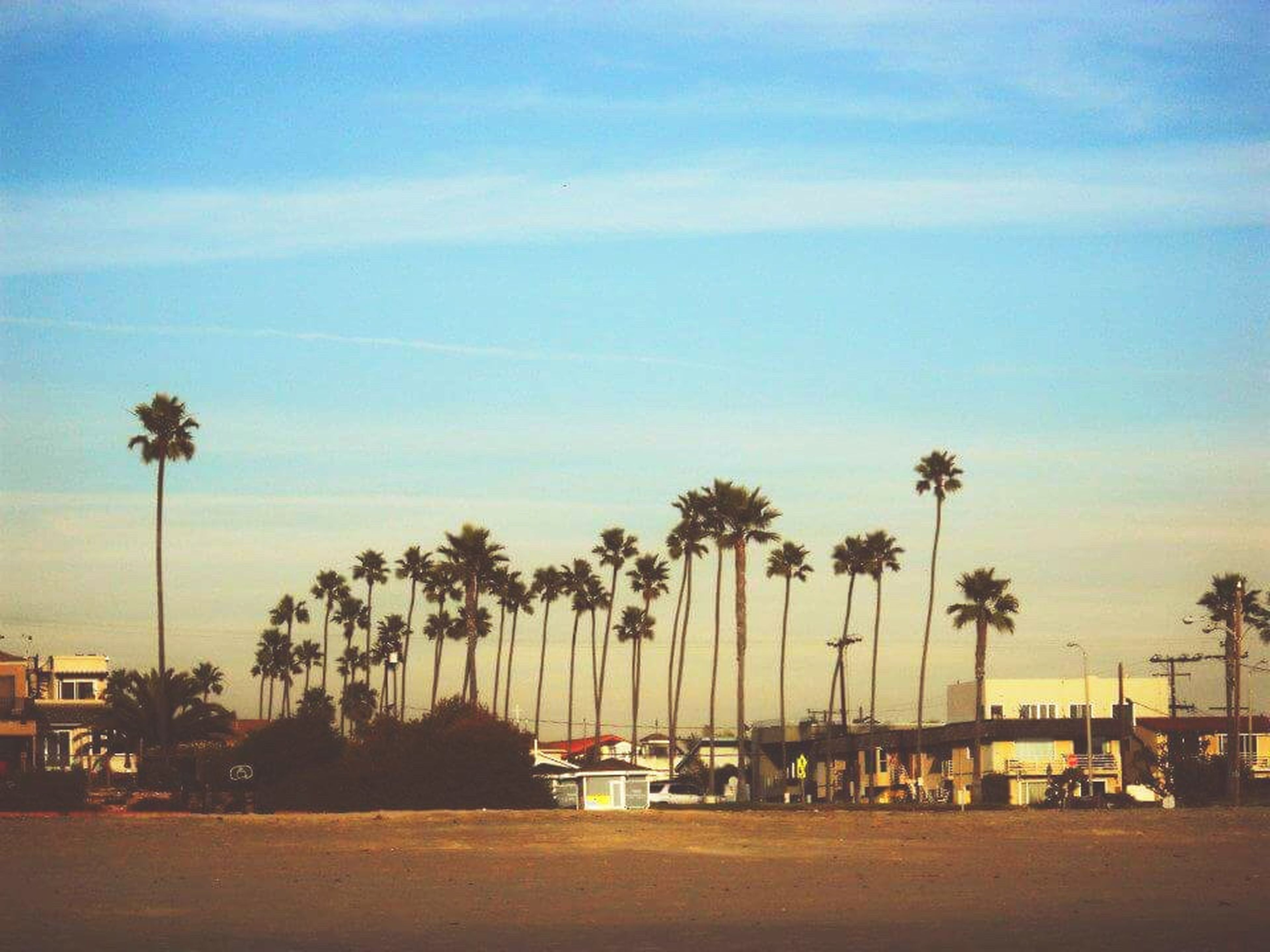 palm tree, tree, sky, outdoors, nature, sea, no people, cloud - sky, built structure, beach, beauty in nature, scenics, day