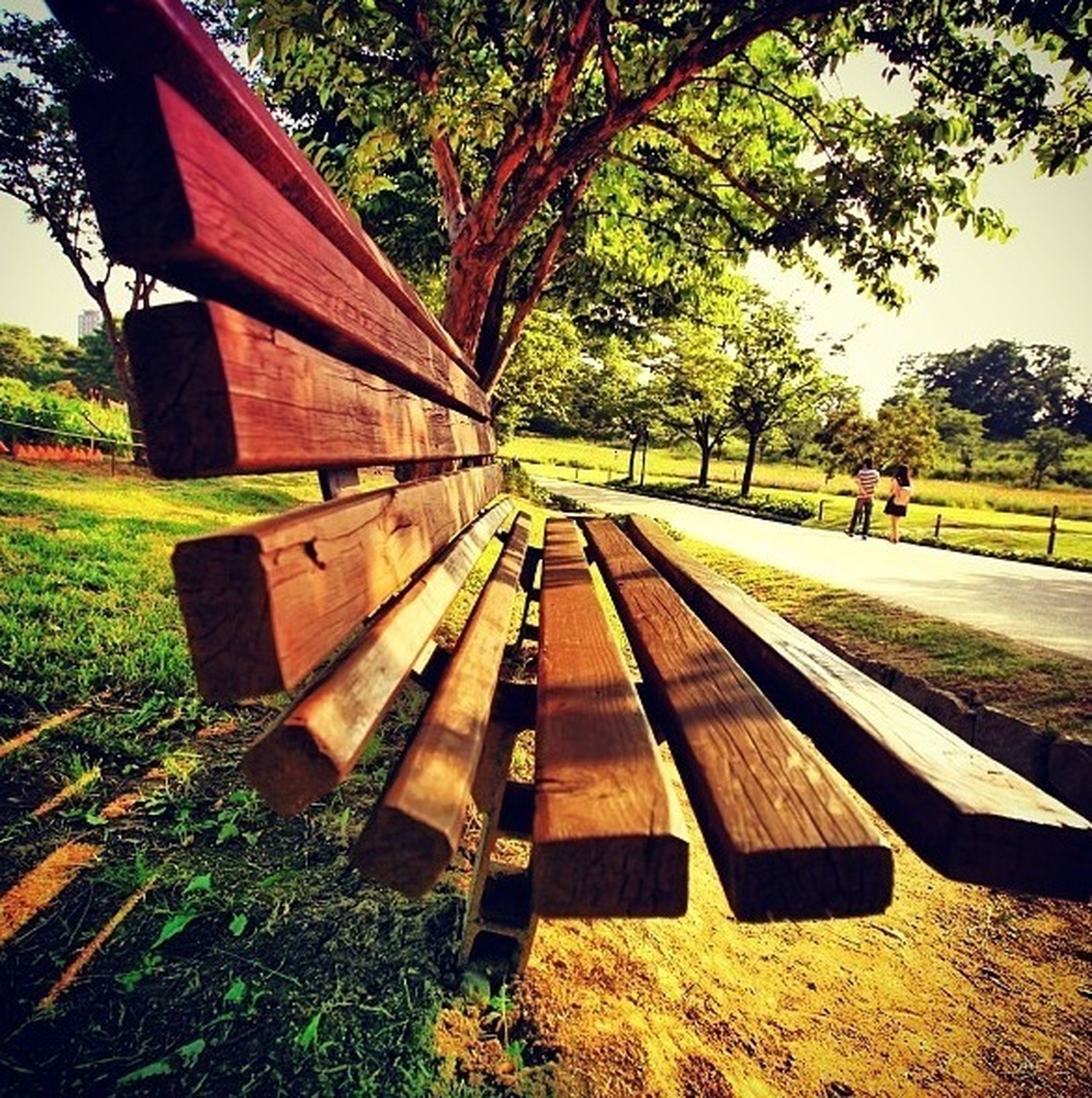 tree, bench, grass, empty, absence, park - man made space, wood - material, seat, sunlight, field, park bench, day, transportation, shadow, park, outdoors, no people, tranquility, wooden, nature