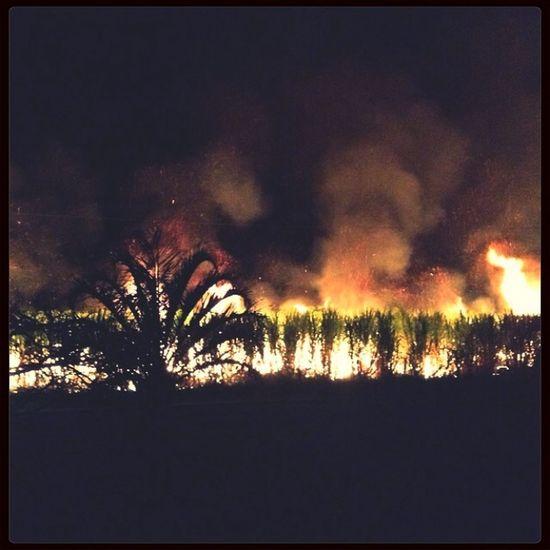 Fire Cane Fire