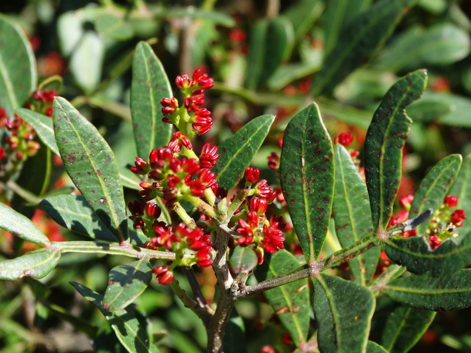 Beauty In Nature Close-up Day Freshness Fruit Green Color Growth Nature No People Outdoors Plant Red