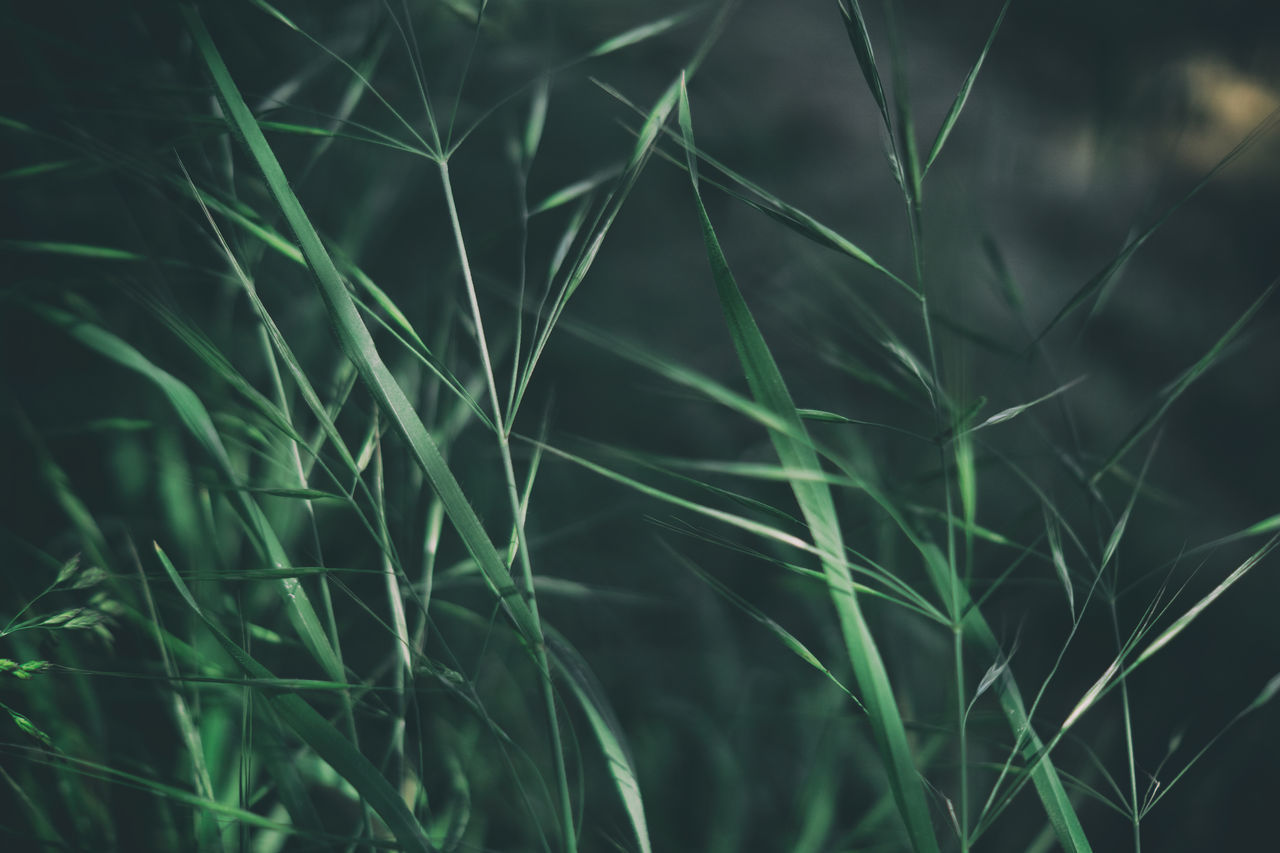 Grass summer Nature Close-up Backgrounds Growth Fragility No People Plant Outdoors Beauty In Nature Taking Photos Alpha 77 II Eye4photography  Getting Inspired Getting Creative Nature Day Freshness Nature_collection