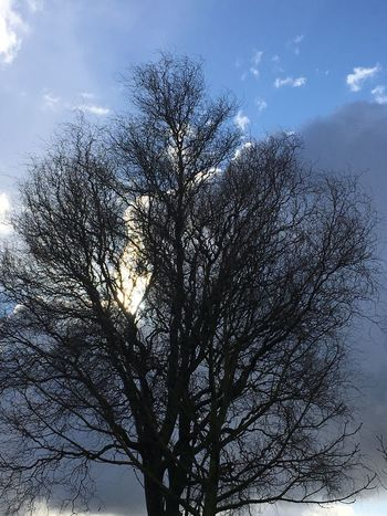 Sky Tree Bare Tree Nature Branch Low Angle View Beauty In Nature