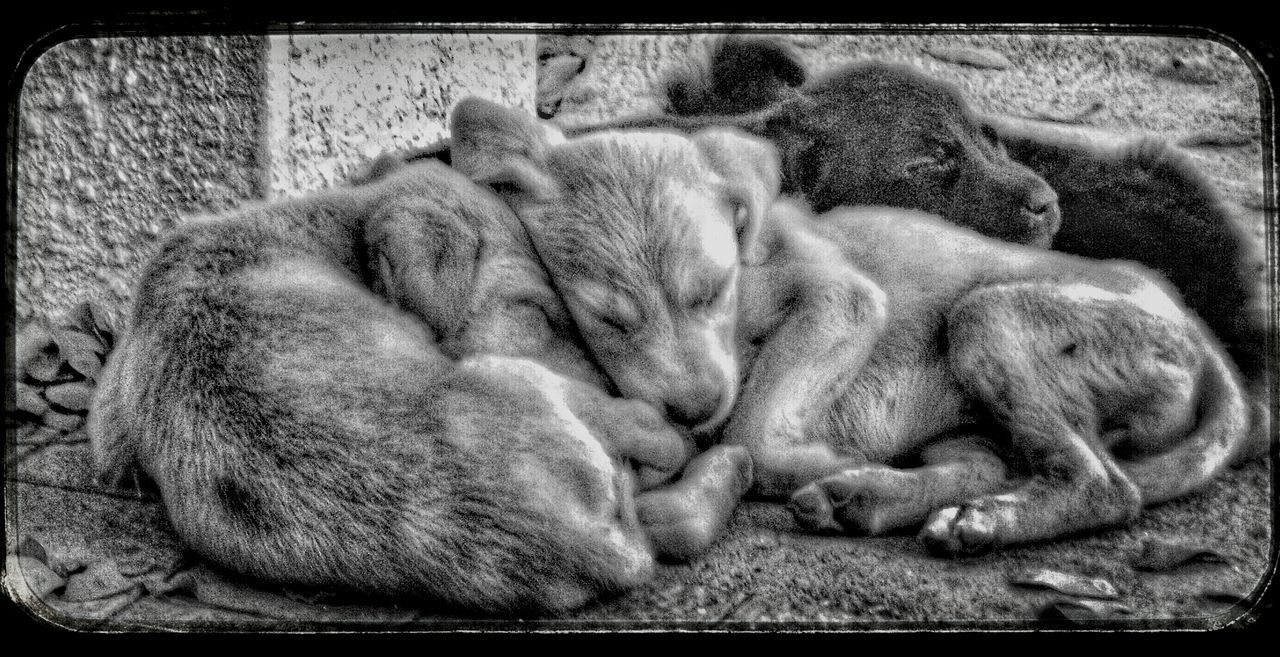 Same Puppies with another photo effect