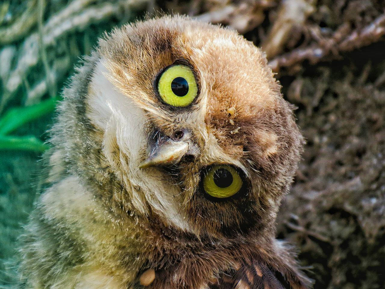 The OO Mission Owl Owls Owl Eyes Naturelovers Popular Photo EyeEm Best Edits Hello World Popular EyeEm Vogel EyeEm Best Shots Popular Photos Nature_collection Nature Photography Nature Birds Of EyeEm  Birds_collection Birds Bird Animal Photography Animal Themes Animal Animals In The Wild Animals
