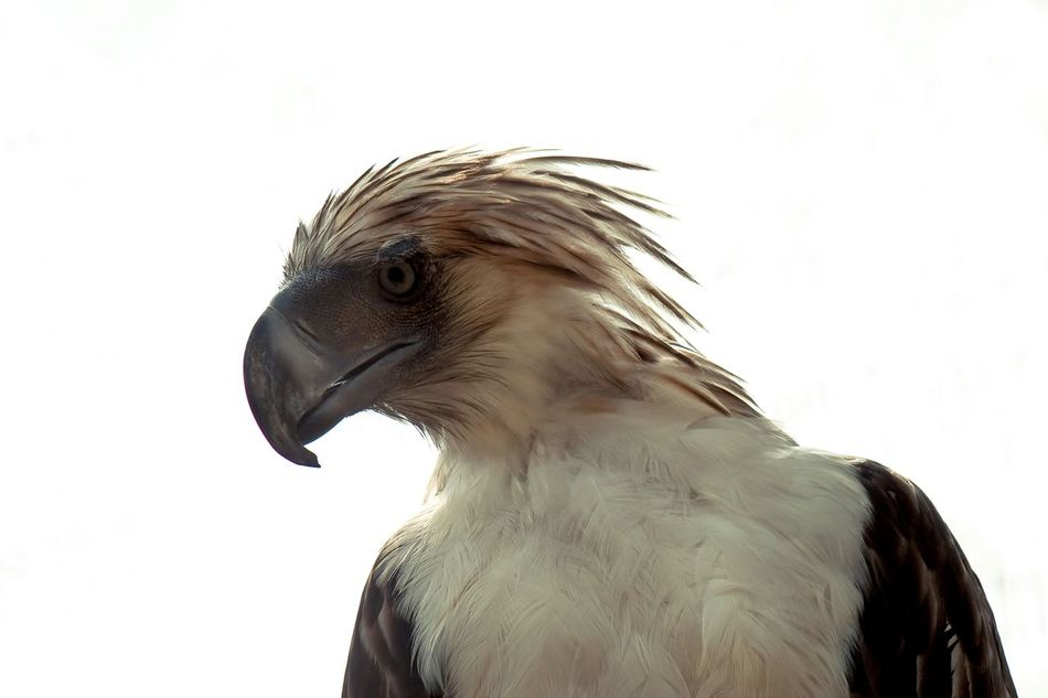Beautiful stock photos of eagle, Animal Themes, Animals In The Wild, Bird, Clear Sky