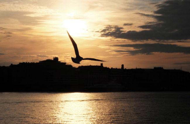 Helsinki - Finland - Nils Nowacki - 2014 Bird Capital Cities  Cloud Cloud - Sky Finland Finnland Helsinki Nils Nowacki Orange Color Scenics Sky Spread Wings Sun Sunset Thiscouldbefinland Tranquil Scene On The Way