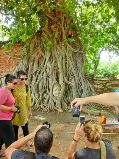 Budhha Head in Tree Roots. Thailand🇹🇭 Thailandtrip Thailand Photos Thailand Love Ayutthaya Historical Park, Bangkok Ayutthaya Thailand Tree Palm Tree Vacations Day Togetherness Outdoors Young Women Real People Leisure Activity Tree Trunk Travel Destinations Young Adult Nature Men Water Adult People Adults Only