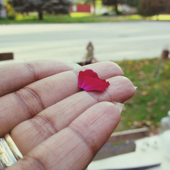 Goodbye, changing season Human Finger Holding Focus On Foreground Personal Perspective Flower Red Day Lifestyles Fragility My Point Of View My Unique Style Canada, Eh? Seasons Change Plant God Red Leaves Growth Home Is Where The Art Is My Hand  The Street Photographer - 2016 EyeEm Awards Beauty Vibrant Color Nature