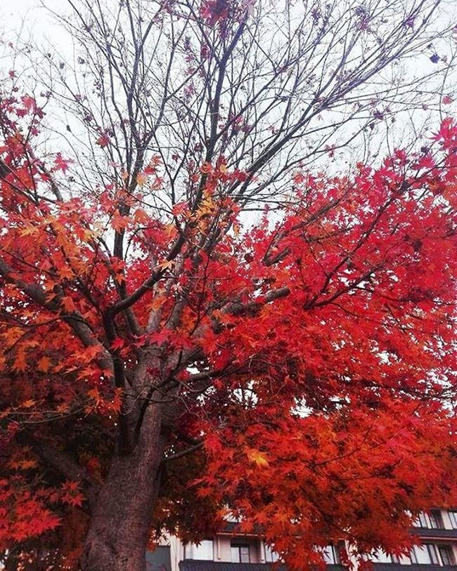 Patience gains all things. ❤ Autumn Japan Tokyo Tokyoblog Red Travel Travelgram Memory Nostalgia Wanderlust Nature Throwback