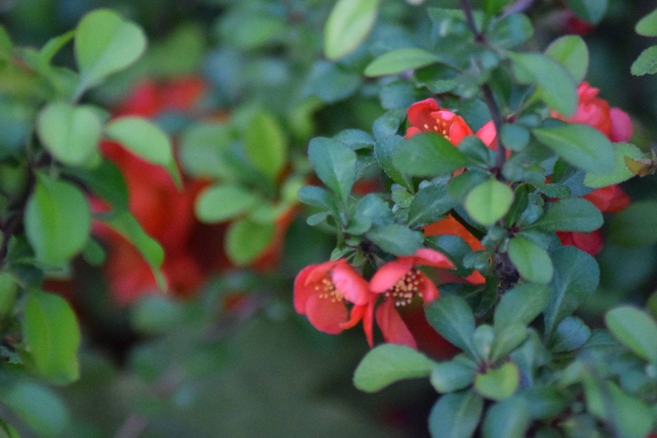 Day Nature Outdoors Flowers Red Flower Red Bloom Growing