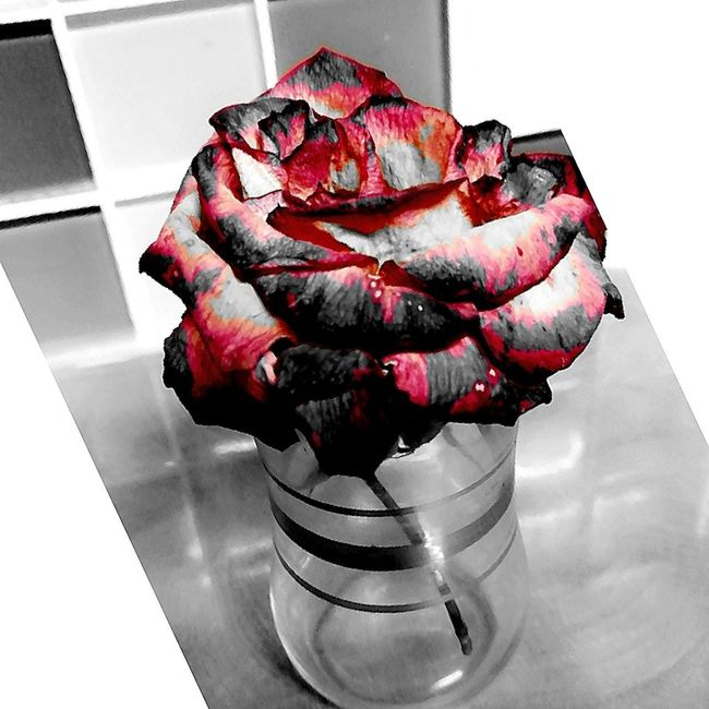 Deadbutalive Beauty In Nature Coloursplash Contrast Pixlr Filters Are Fun