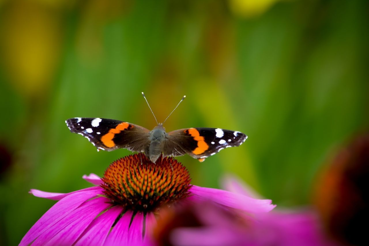 Butterfly Views EyeEm Nature Lover Nature_collection