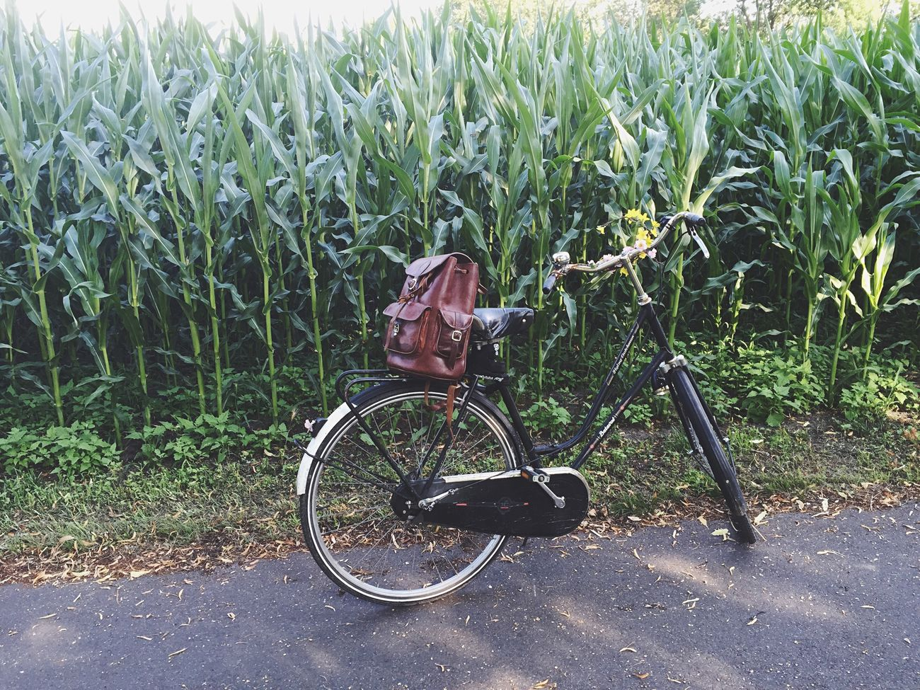 Beautiful stock photos of music festival, Bag, Bicycle, Day, Field