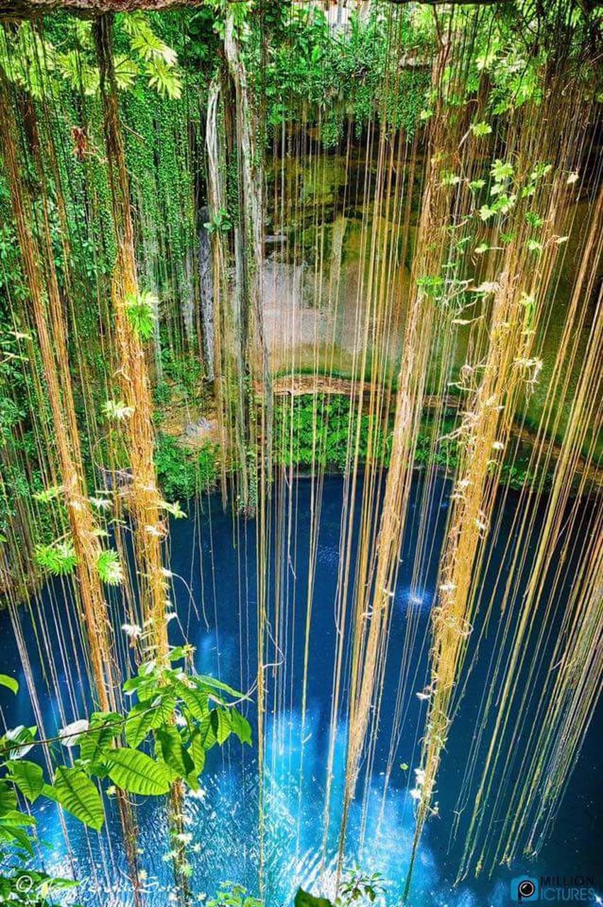 water, growth, tranquil scene, outdoors, tranquility, beauty in nature, nature, lake, no people, forest, reflection, day, scenics, plant, bamboo - plant, bamboo grove, grass, tree