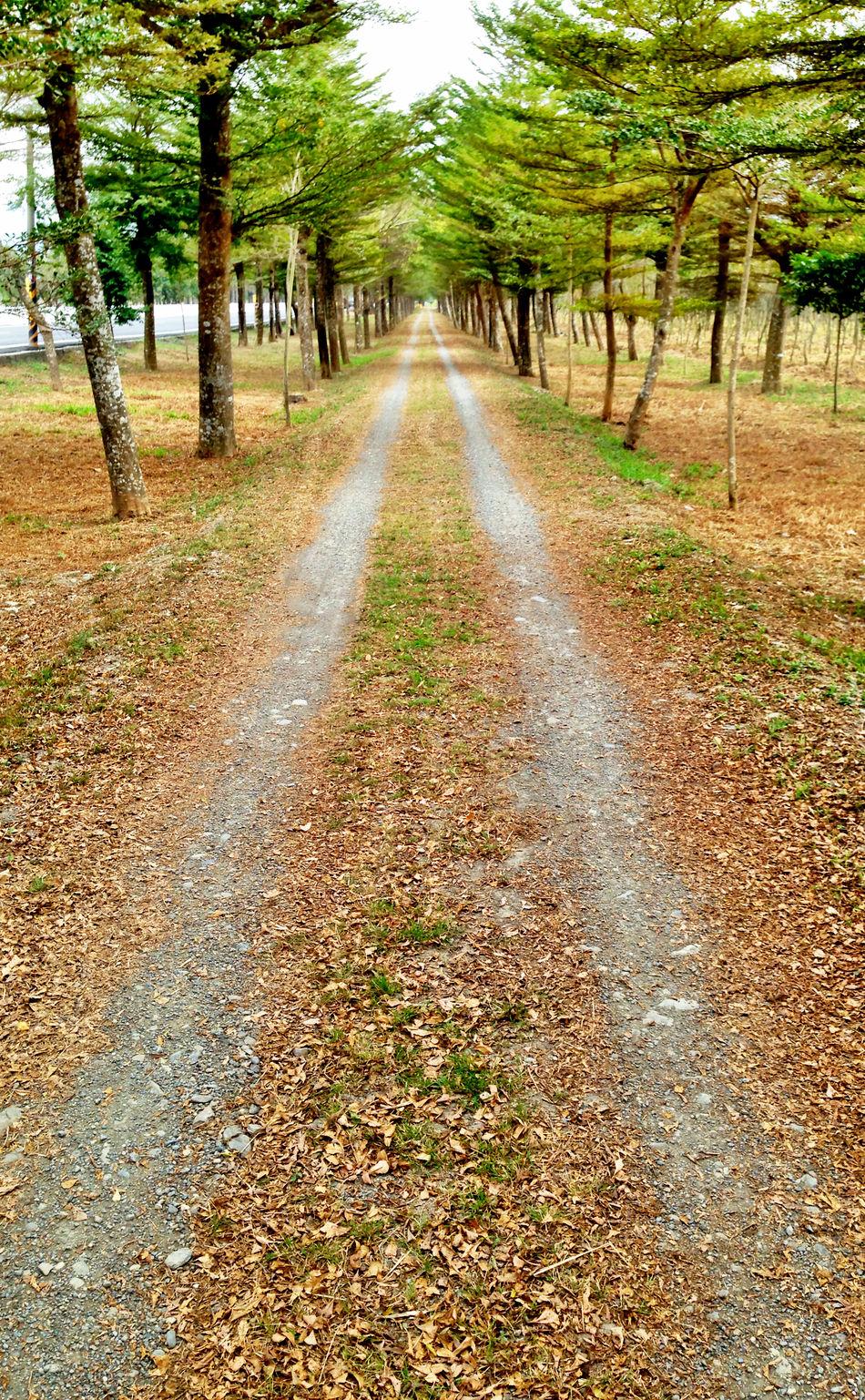 望斷天涯路! Trees Forest Trail