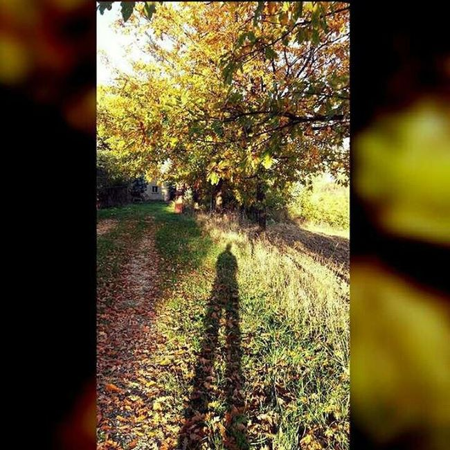 Le lunghe ombre d'autunno...🍁🍁🍁 Autunno  Autumnleaves Ombra November Novembre Foglie Fogliegialle Leaves Yellowleaves Campagna Instagood Instamood Picoftheday