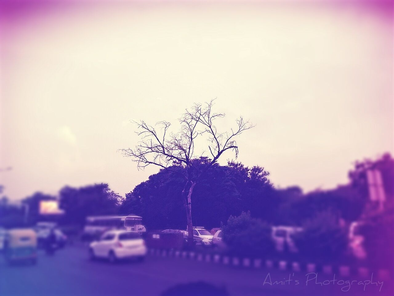 tree, car, sky, bare tree, outdoors, nature, no people, road, branch, sunset, beauty in nature, day, close-up